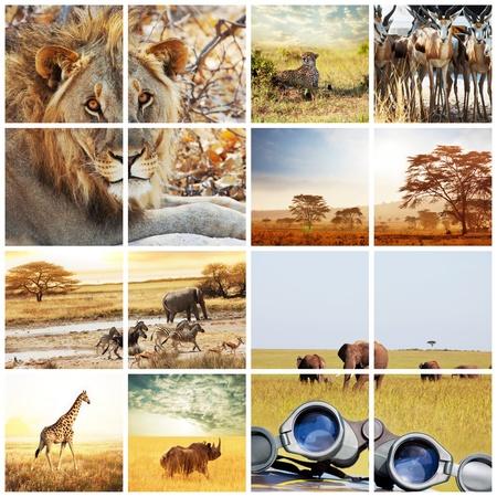 african safari in Etosha,Namibia