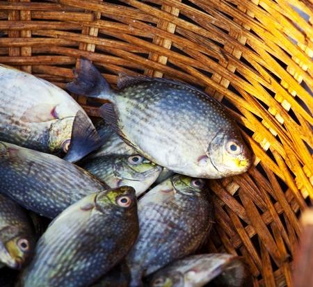 galle: fish market Stock Photo