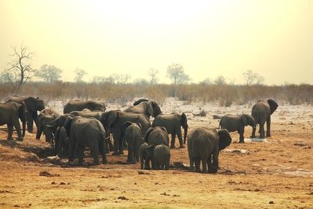 Elephant Stock Photo - 13530366