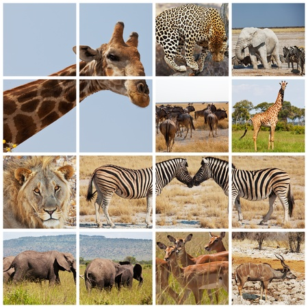 african safari in Etosha,Namibia photo