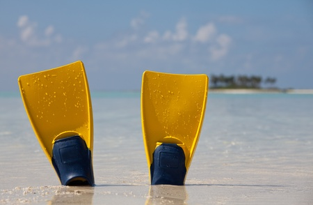 snorkeling: snorkeling
