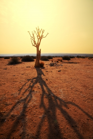 namibia: Quiver tree in Namibia, Africa