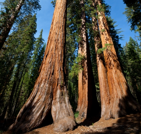 national forests: sequoia