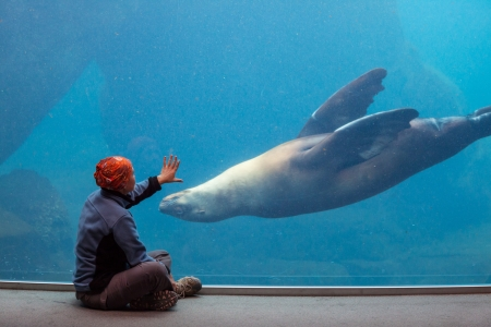 girl playing with sealion Stock Photo - 15198954