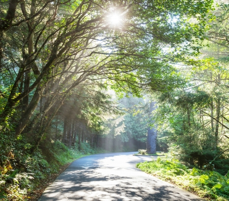 beautiful woodland: Sunny beams in forest