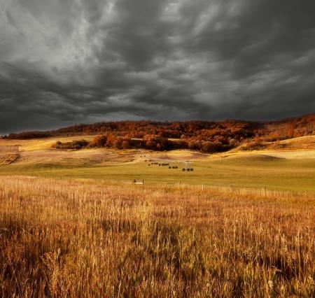 fields in fall season photo