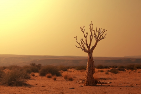 namibia: Dead valley in Namibia