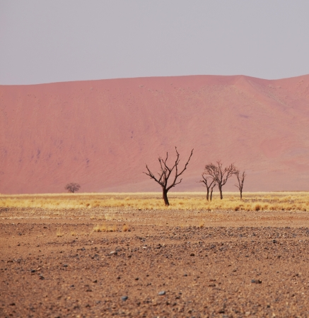 Dead valley in Namibia photo