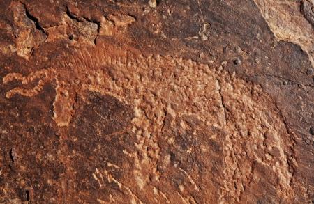 peinture rupestre: pétroglyphes au Maroc