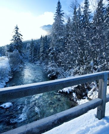 pine creek: Winter forest