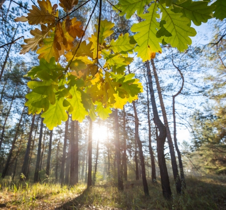 america countryside: Autumn forest Stock Photo