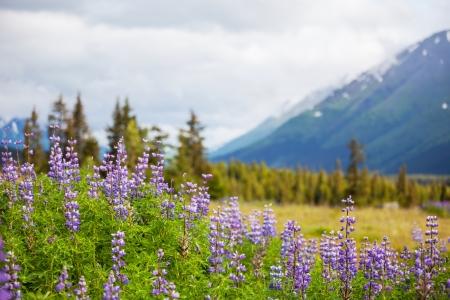 road in Alaska photo