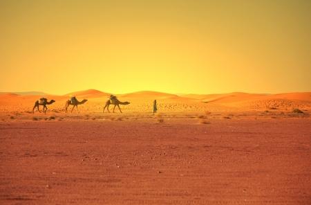 desierto del sahara: Caravana en el desierto del Sahara