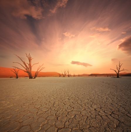 arboles secos: Dead valle en Namibia
