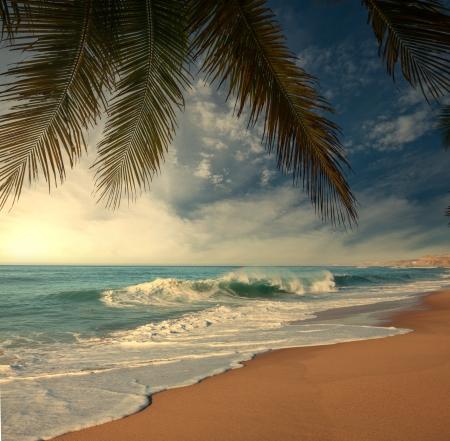 shore: Tropical beach Stock Photo