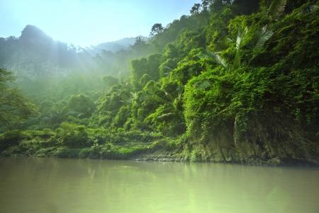 humid: jungle in Vietnam Stock Photo