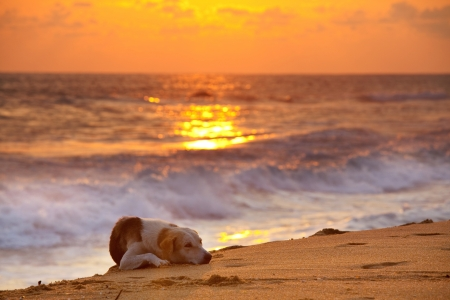 dog on beach at sunset Stock Photo - 16713628