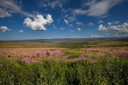 alpine tundra: tundra in Alaska