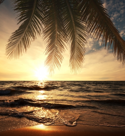 Tropical beach Stock Photo - 16823331