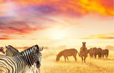 zebra's bij zonsondergang