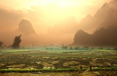 field in Vietnam photo