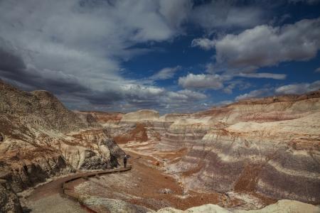 petrified fossil: Petrified Forest National Park, Arizona.