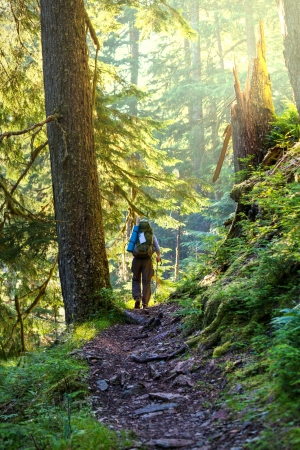 sequoia: Boy backpacker in forest Stock Photo