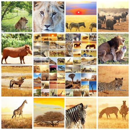animales del desierto: african safari collages