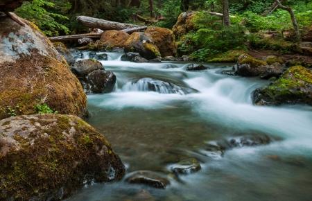 swift: creek in forest