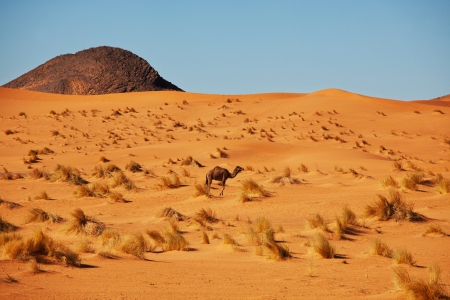 Camel in sand desert Stock Photo - 17565712