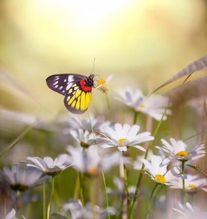 Farfalla sul fiore Archivio Fotografico