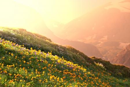 MOUNT RAINIER: mountains meadow Stock Photo