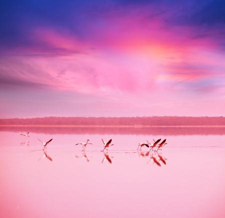 pink flamingo Stock Photo - 17958061