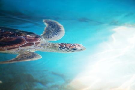 turtle photo