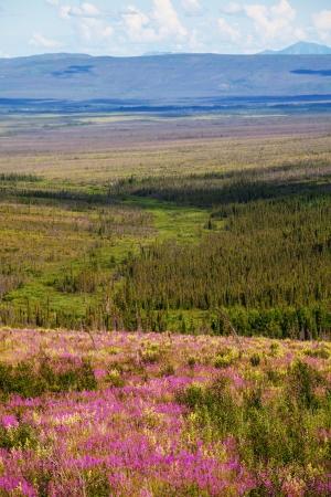 tundra: tundra in Alaska
