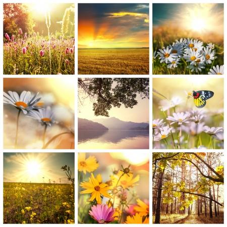 Flower spring background photo