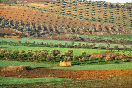 fields in Morocco photo