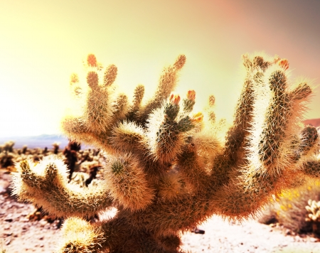 Saguaro National Park Stock Photo - 19444133