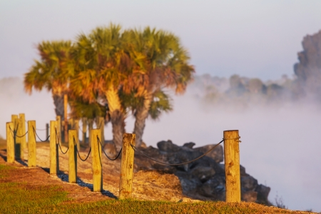 woodland  horror: Magic river of misty