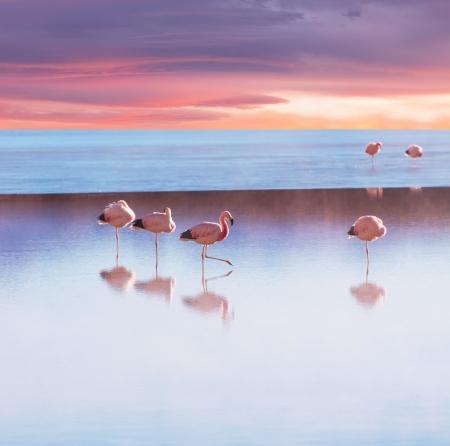 uyuni: flamingo in Bolivia