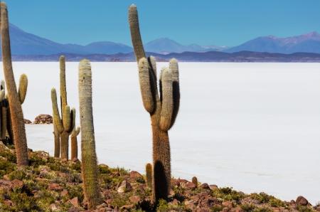 salar de uyuni: Salar de uyuni, Bolivia Stock Photo