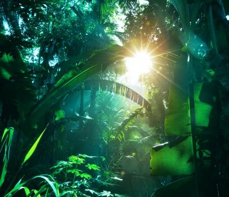 jungle green: selva en Vietnam Foto de archivo