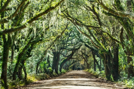 Trees tunnel -Botany Bay,South Carolina photo