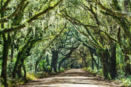 backwoods: Trees tunnel -Botany Bay,South Carolina