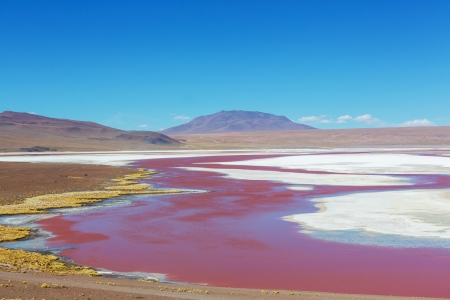 algae: Laguna Colorada in Bolivia
