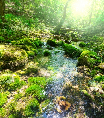 creek in forest photo