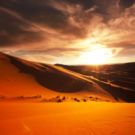 animales del desierto: El desierto del Sahara Foto de archivo
