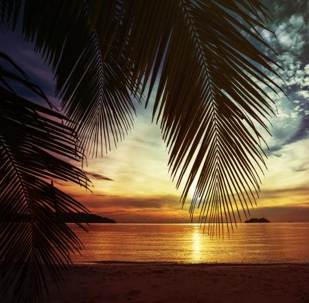 palm tree sunset: Tropical beach Stock Photo