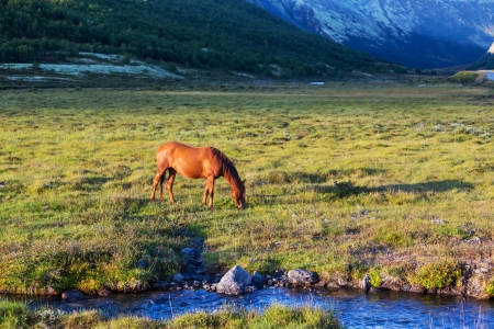 mustang horse: Horse on meadow Stock Photo