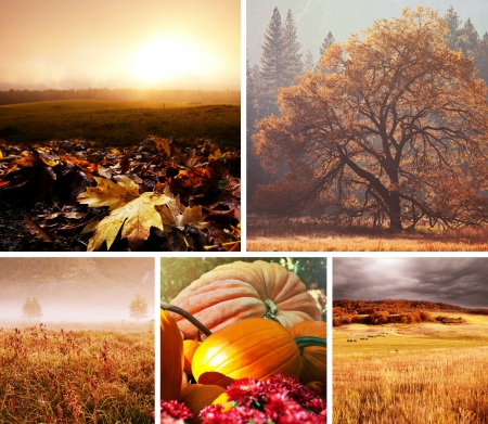 autumn orange collage Stock Photo